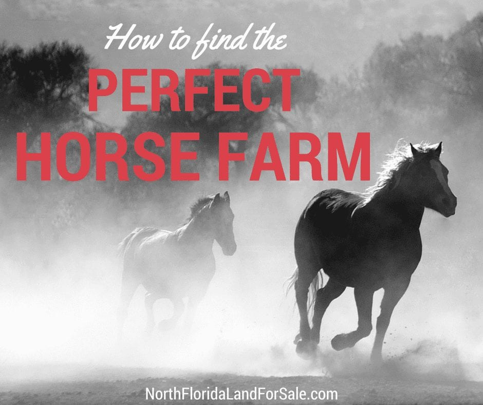 How to Find the Perfect Horse Farm in North Florida
