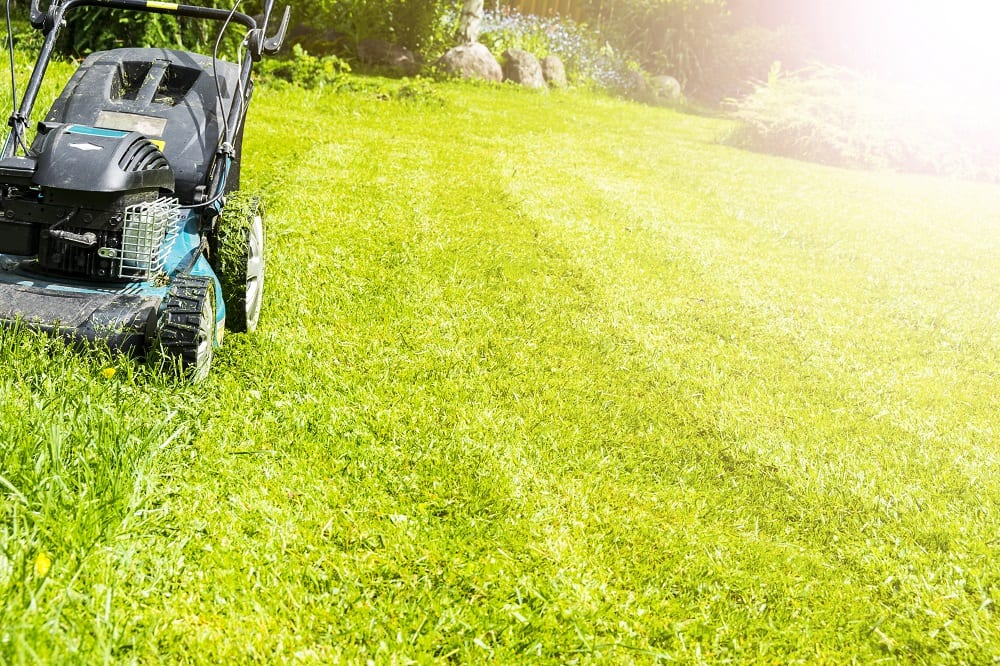 3 Mistakes to Avoid in Your Yard